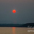 Hanging Sun by Robert Bales