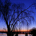 Hanging Tree Sunrise by Metro DC Photography
