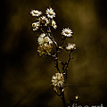 Happily Ever Aster by Mitch Shindelbower