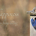 Happiness Comes From Loving by Lori Deiter