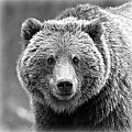Happy Bear by Stephen Stookey