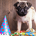 Happy Birthday Cute Pug Puppy by Edward Fielding