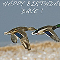 Happy Birthday Dave  by Rob Mclean