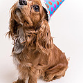 Happy Birthday Dog by Edward Fielding