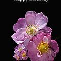Happy Birthday Pink Roses by Joy Watson