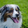 Happy Dog by Jeff Ortakales