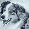 Happy Dog by Jutta Maria Pusl