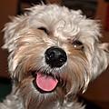 Happy Dog by Ruben Barbosa