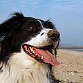 Happy Dog by Steve Ball