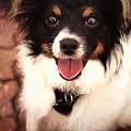 Happy Face Doggie by Ola Allen