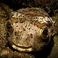 Happy Fish by Craig Dietrich