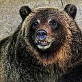 Happy Grizzly Bear by Elaine Malott
