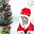 Xmas Holidays Greeting Card 108 by Zina Zinchik