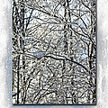 Happy Holidays Greeting - Icicles On Trees by Mother Nature
