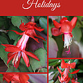 Happy Holidays Natural Christmas Card Or Canvas by Carol Groenen