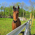 Happy Horse by Elizabeth Dow