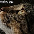 Happy Mothers Day Cat by Sarah Broadmeadow-Thomas