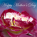 Happy Mother's Day Red Pink White Rose by Randall Branham