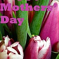 Happy Mothers' Day Tulip Bunch by Barbie Corbett-Newmin