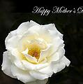 happy Mother's Day White Rose by Randall Branham