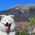 Happy Mountain Dog by Fiona Kennard