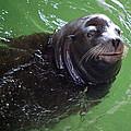 Happy Seal by AJ  Schibig
