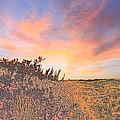 Happy Sunset by Augusta Stylianou