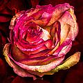 Happy Valentine's Day - 1 by Alexander Senin
