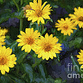 Happy Yellow Flowers Painterly by Andee Design