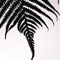 Hapu'u Frond Leaf Silhouette by Lehua Pekelo-Stearns