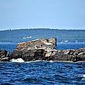 Harbor Rocks by Tara Potts