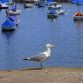 Harbor Watch by Joann Vitali