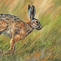 Hare by David Stribbling