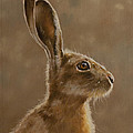 Hare Portrait I by John Silver