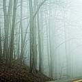 Harlan County Woods by Lars Lentz