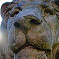 Harlaxton Lions by Tiffany Erdman