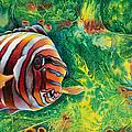 Harlequin Tuskfish by Mara  Mattia