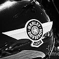 Harley Davidson Aviation Themed Star Logo On Fat Boy Bike In Orlando Florida Usa by Joe Fox