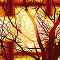 Harmonious Colors - Sunset by Shawna Rowe
