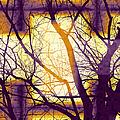Harmonious Colors - Violet Yellow Orange by Shawna Rowe