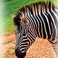 Hartman Zebra by Tara Potts