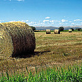 Harvest 3 by Terry Reynoldson