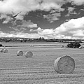 Harvest Fly Past Black And White Square by Gill Billington