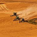 Harvest by Mary Jo Allen