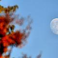Harvest Moon by Karen M Scovill