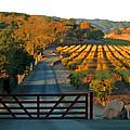 Harvest Morning by Ann Nunziata