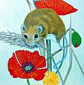 Harvest Mouse by Olive Denyer