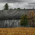 Harvest Season by Paul Freidlund