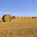 Harvest Season by Yves Gagnon