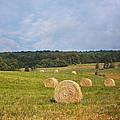 Harvest Time by Kim Hojnacki
